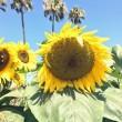 OC Fair 2014 – Orange County, CA