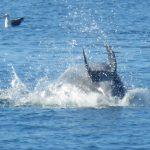 Newport Dolphins