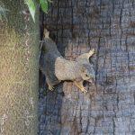 Squirrel vs. Cat – Riverside
