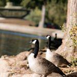 A Morning at Fairmount Park in Riverside, CA