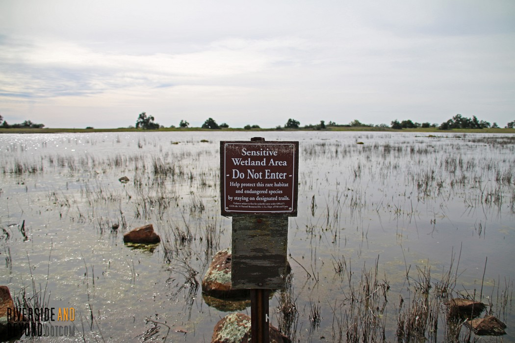 Santa Rosa Plateau - Big Vernal Pool