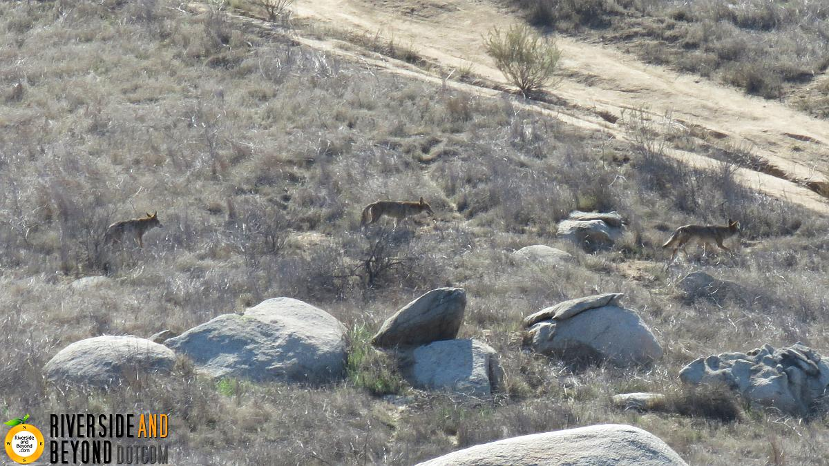 Sycamore Canyon Wilderness Park