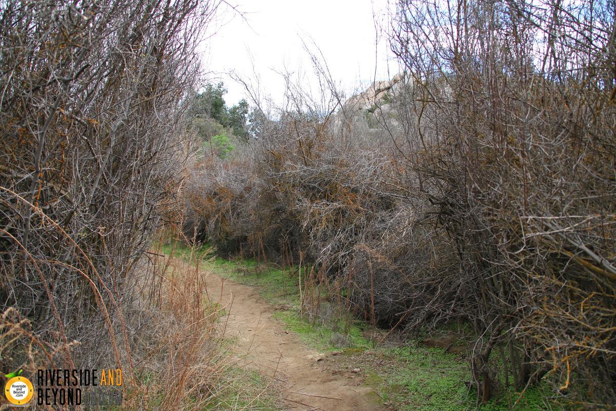 Harford Springs Reserve